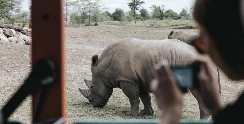 Conseils pour un safari en Afrique que vous devez savoir !