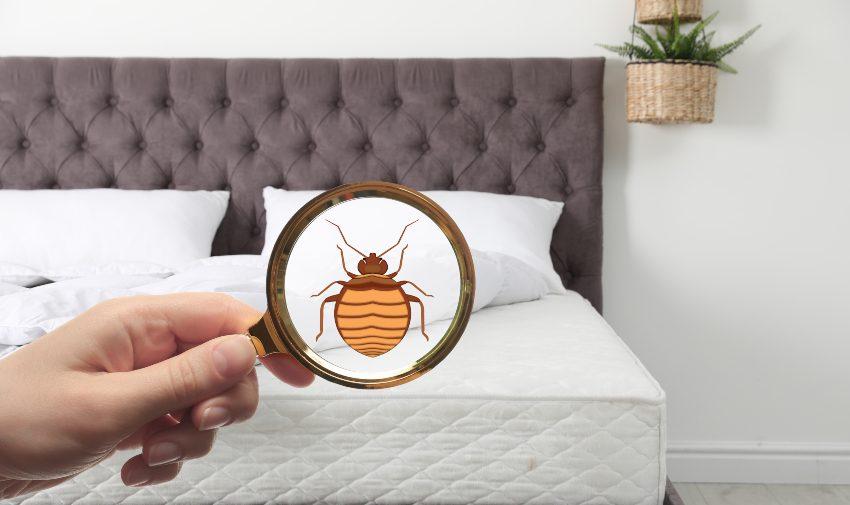 Quel odeur et couleur ont les punaises de lit ?