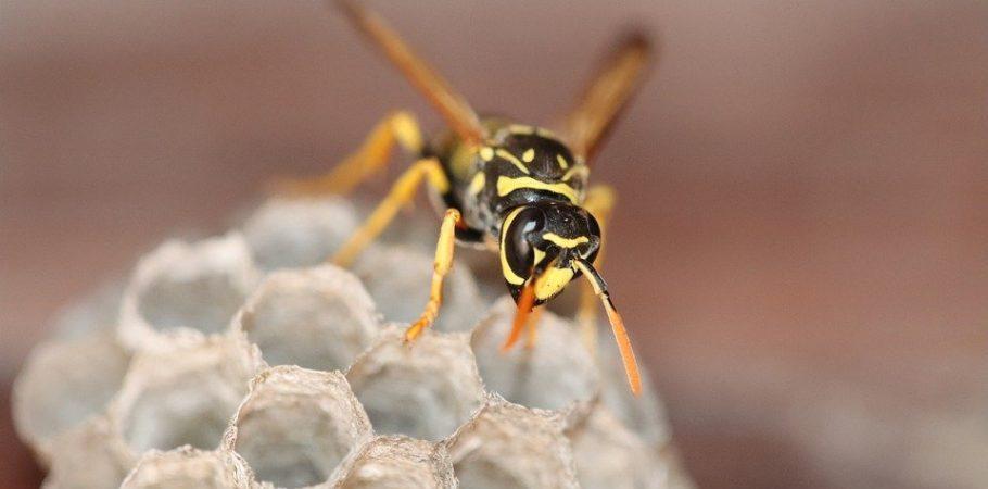 Comment lutter contre l'apparition des nids de frelons ?